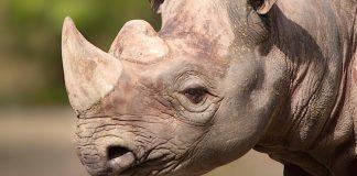 Erlebnis-Zoo Hannover Gutschein 2 für 1 Coupon Rabatt Ticket