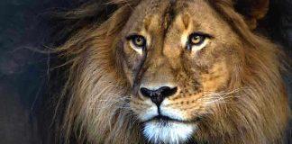 Safaripark Beekse Bergen Gutschein 2 für 1 Coupon Rabatt