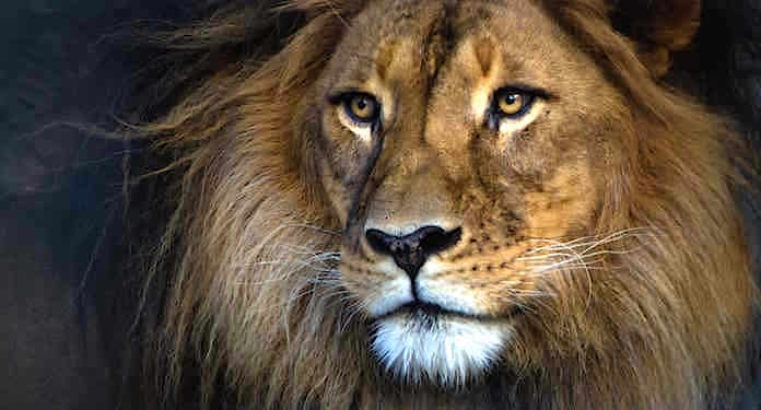 safaripark stukenbrock gutschein 2 für 1