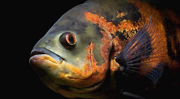 Sea Life Auswilderung Leine