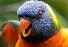 Weltvogelpark Walsrode Gutschein 2 für 1 Coupon Ticket Rabatt