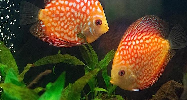 Alb-Aquarium Gutschein 2 für 1 Coupon