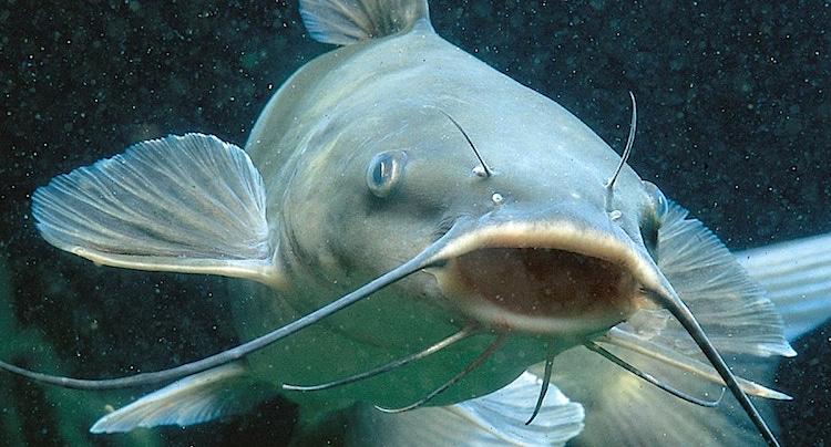 Alb-Aquarium Gutschein 2 für 1 Coupon Ticket