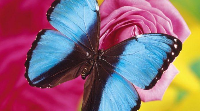 Allgäuer Schmetterlings-Erlebniswelt Gutschein 2 für 1 Coupon Ticket