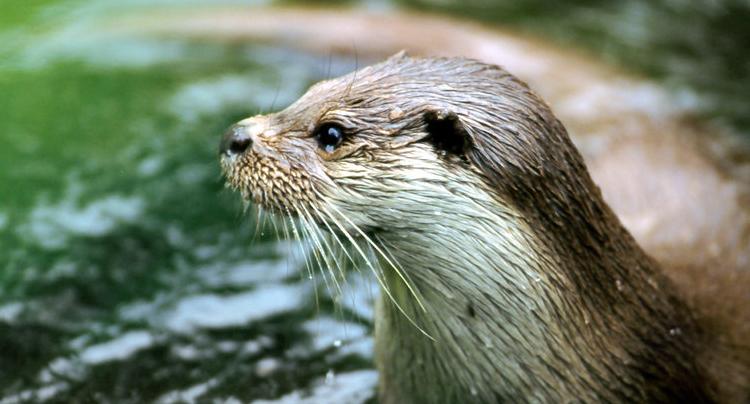 Otter Zentrum Gutschein 2 für 1 Coupon