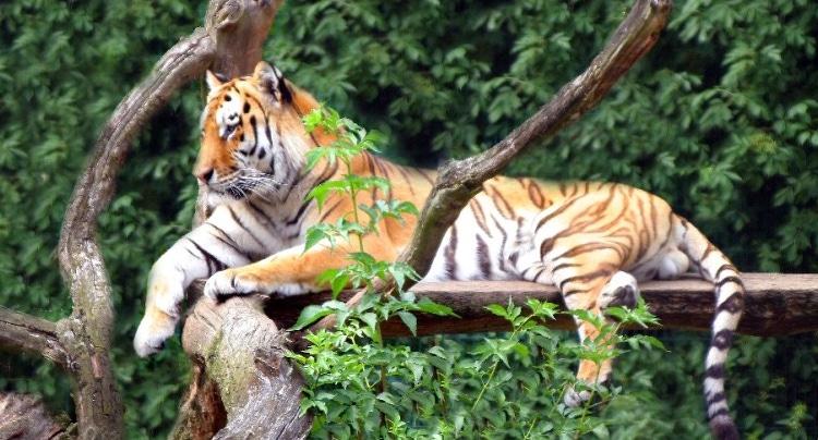 Tierpark Ströhen Gutschein 2 für 1 Coupon Ticket