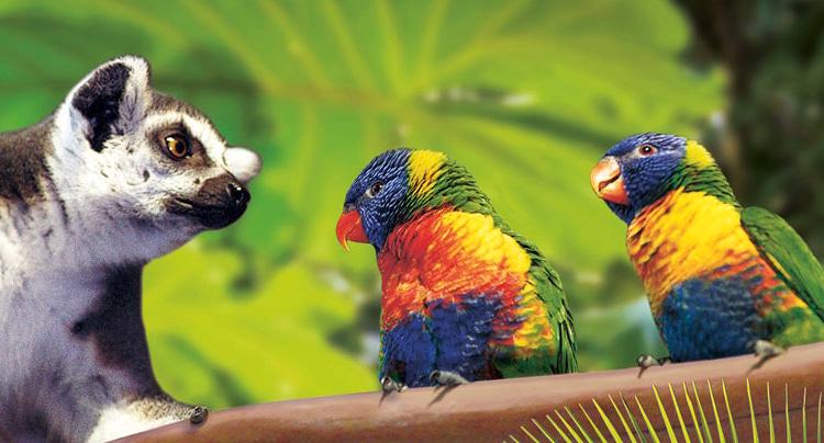 Tropen-Aquarium Hagenbeck Gutschein 2 für 1 Coupon