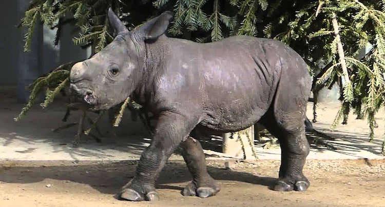 Zoo Augsburg Gutschein 2 für 1 Coupon