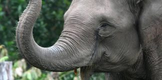 Zoo Karlsruhe Gutschein 2 für 1 Coupon Rabatt