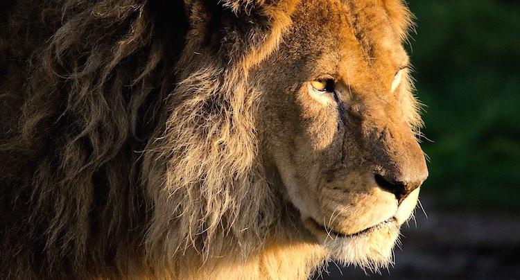 Zoo Safaripark Stukenbrock Gutschein 2 für 1 Coupon
