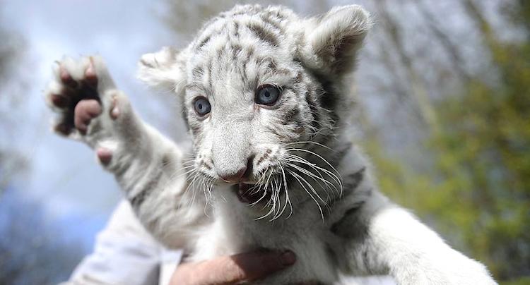 safaripark stukenbrock gutschein code