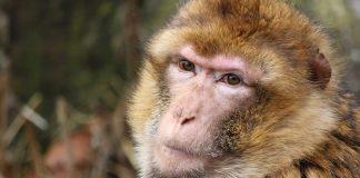 Tierpark Bad Pyrmont Gutschein 2 für 1 Coupon Ticket
