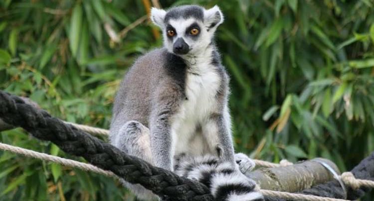 Tierpark Gettorf Gutschein 2 für 1 Coupon