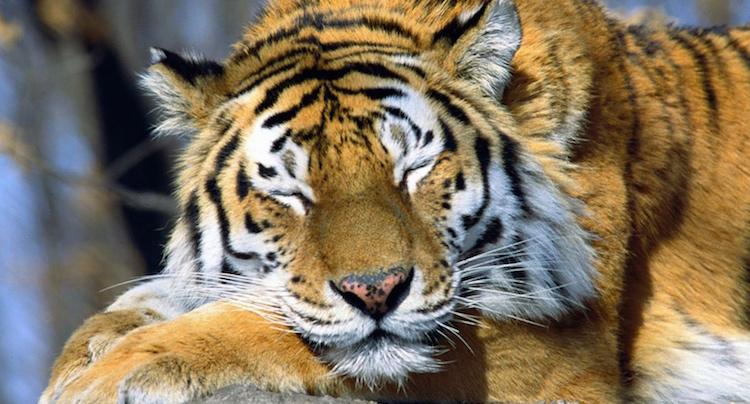 Tierpark Gotha Gutschein 2 für 1 Coupon Ticket