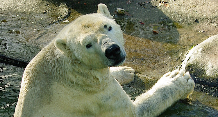 Tierpark Neumünster Gutschein 2 für 1 Coupon Ticket