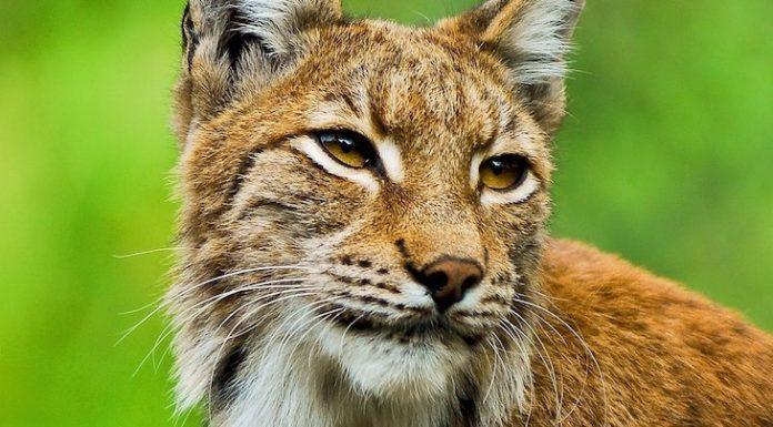 Tierpark Wismar Gutschein 2 für 1 Coupon Ticket