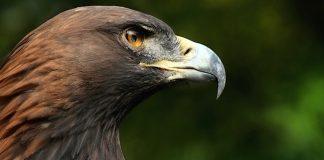 Wildfreizeitpark Oberreith Falknerei Gutschein mit 38 Prozent Rabatt