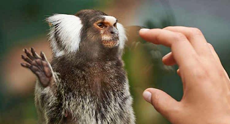 Zoo Frankfurt Gutschein 2 für 1 Coupon