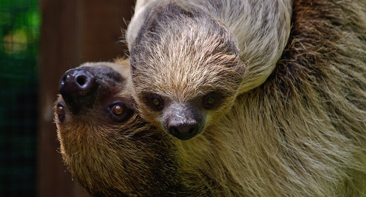 Zoo Heidelberg Gutschein 2 für 1 Coupon