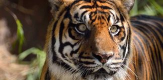Zoo Heidelberg Gutschein 2 für 1 Coupon Ticket