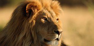 Zoo Hoyerswerda Gutschein 2 für 1 Coupon Ticket