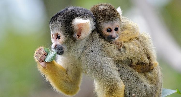 Affen- und Vogelpark Eckenhagen Gutscheine 2 für 1 Coupon