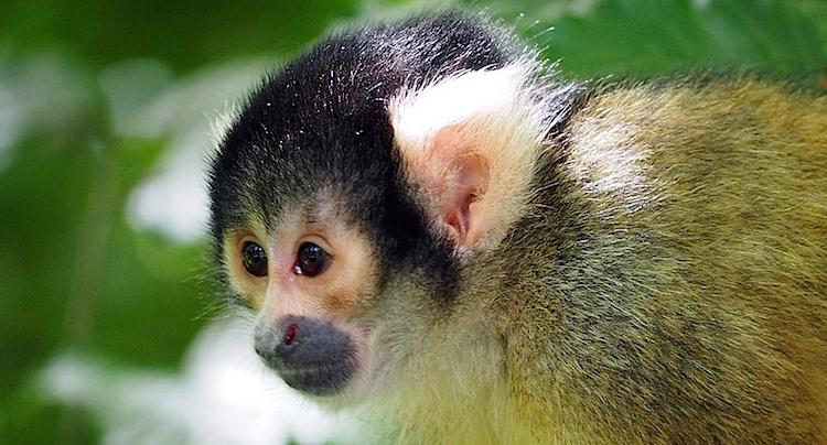 Affen- und Vogelpark Eckenhagen Gutschein 2 für 1 Coupon