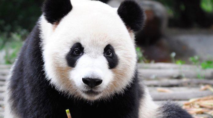 Zoo Berlin Panda Awards