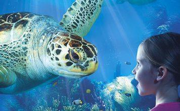 Sea Life Gutschein 2 für 1 Coupon Ticket