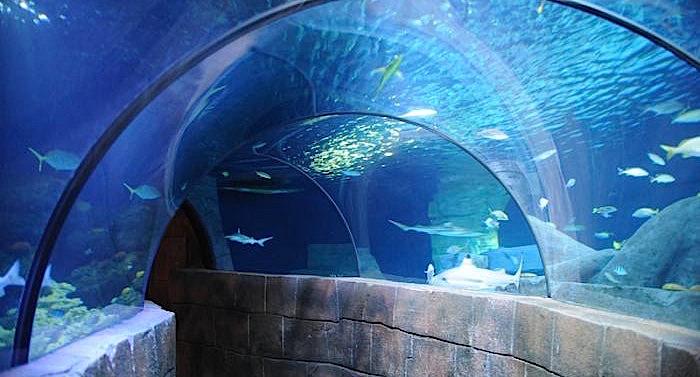 Sea Life Hannover Gutschein 2 für 1 Coupon
