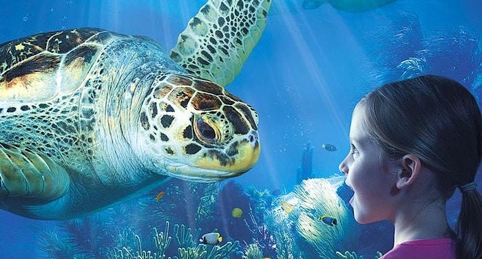 Sea Life Hannover Gutschein 2 für 1 Coupon Ticket