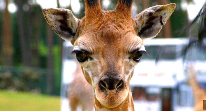 serengeti park gutscheine 2 für 1 2020