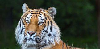 Tierpark Hagenbeck Gutschein Ostern 2018