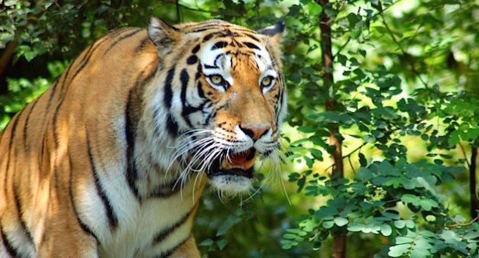 Tierpark Ströhen Gutschein