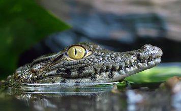 Welt der Reptilien Zoo Torgau Gutschein