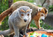 Zoo Leipzig Gutschein Ostern 2018