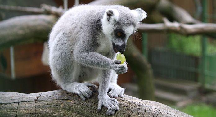 Tierpark Hamm