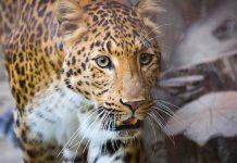 Erlebnis Zoo Hannover Gutschein 2 für 1 Coupon