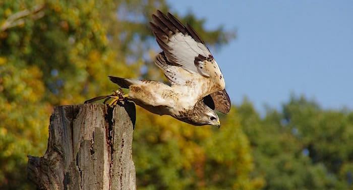 Greifvogelpark Katharinenberg Gutschein 2 für 1 Coupon