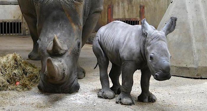 Kölner Zoo Gutschein 2 für 1 Coupon