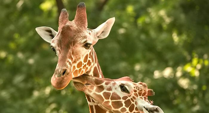 Thüringer Zoopark Gutschein 2 für 1 Coupon