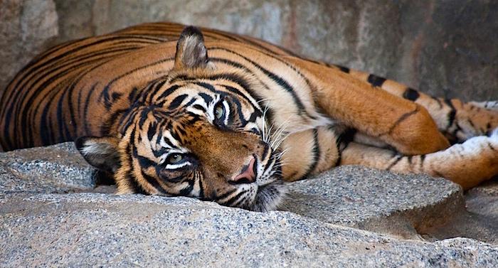 Tierpark Berlin Gutschein 2 für 1 Coupon