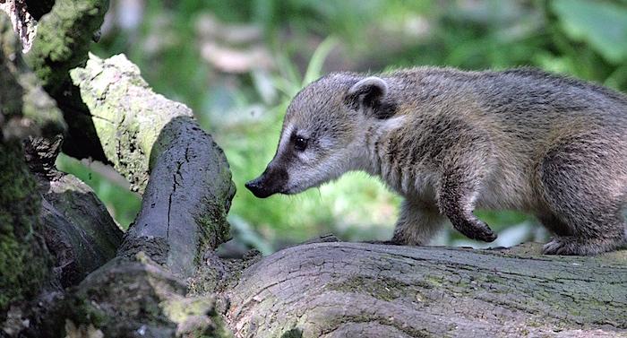 Tierpark Hagenbeck Gutschein 2 für 1 Coupon