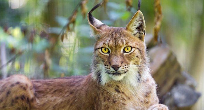 Tierpark Nadermann Gutschein 2 für 1 Coupon