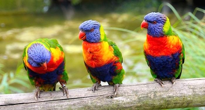Vogelpark Marlow Gutschein 2 für 1 Coupon Ticket