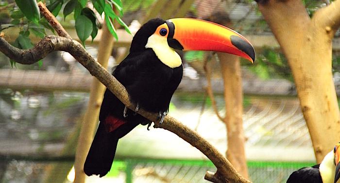 Weltvogelpark Walsrode Gutschein 2 für 1 Coupon