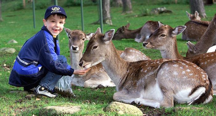 Wildpark Lüneburger Heide Gutschein 2 für 1 Coupon