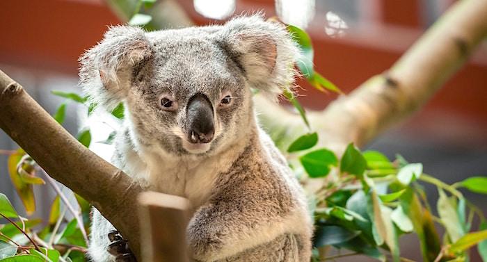 Zoo Antwerpen Gutschein 2 für 1 Coupon Code Ticket mit Rabatt
