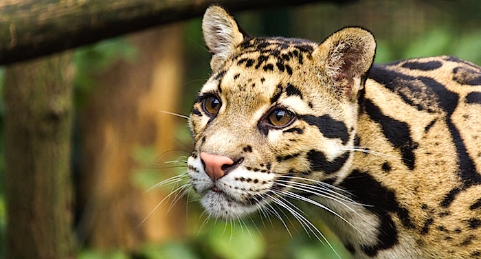 Zoo Dortmund Gutschein 2 für 1 Coupon