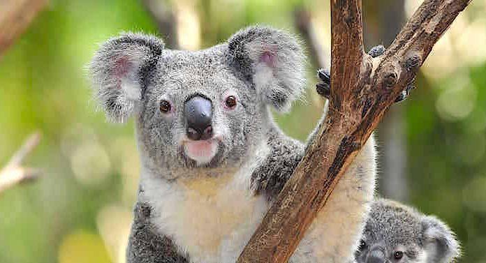 rabatt für zoo duisburg